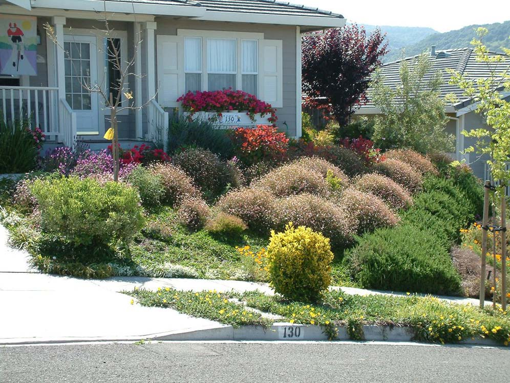 Shrub filled front yard for Bushes for front yard