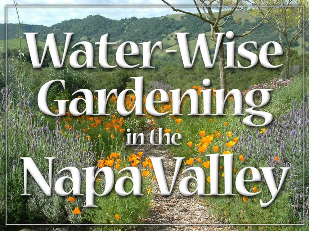 Water Wise Gardening In The Napa Valley